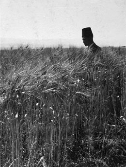 chalil raad, wheat field in the jordan valley