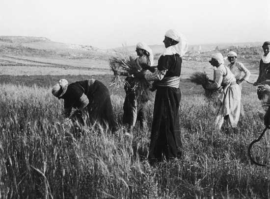 hannah safieh, harvest, 1930s, courtesy of raffi safieh