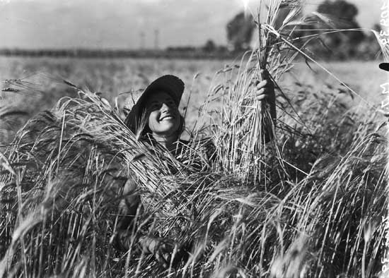 zoltan kluger,  girl from kfar vitkin in a wheat field, jnfarchive