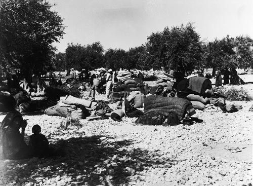 ali za'arour,  palestinian refugees in an olive grove, 1948, courtesy zaki zaarour
