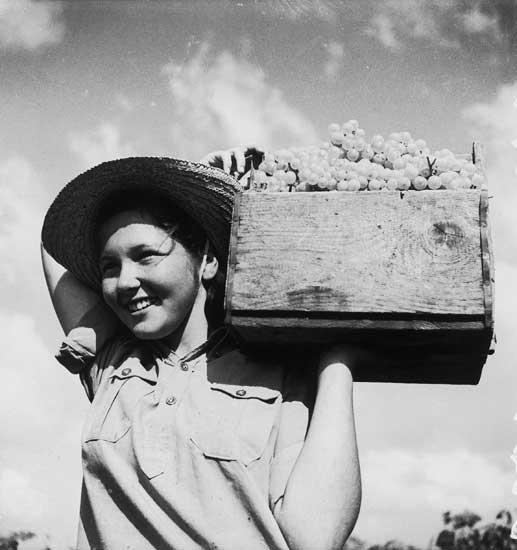 זולטן קלוגר, מפרי הארץ, ענבים, ראשית שנות הארבעים, גנזך המדינה
