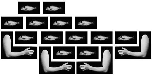 גליה גור-זאב, ארכיטיפ, 1993