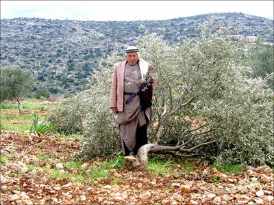 פלסטיני ליד עץ שנעקר, 16.3.2005, יש דין